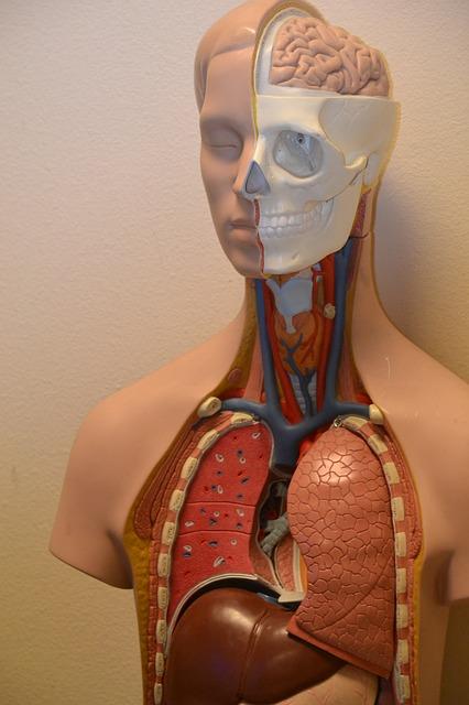 あなたの肝臓やばいかも!?場所やサインや原因、症状は?